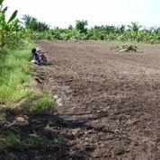 Super baguss Jual lokasi tanah dipandaan :
