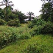 Tanah Pinggir Jalan Tajur Halang Dekat Akses Jalur Pemda Cibinong