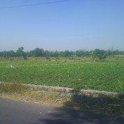 Tanah Sawah 200ha Di Kebonsari Sukorejo (1,5km Dari Jln Lintas Kabupaten Pasuruan)