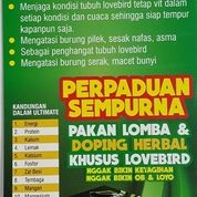 Perpaduan Sempurna Ultimate Herbal + Ultimate Pakan Lovebird Competition
