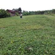 Tanah kavling di Bali cuma 1,5 are( 150m2) hot deal