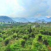 Tanah Didekat Wisata Selecta Kota Batu View Bagus