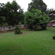 Tanah Matang Cirendeu Ciputat