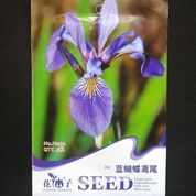 Butterfly Iris - Blue