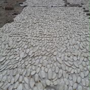 Asinan Tulang Sotong Kalsium Dan Utk Gacorkan Burung