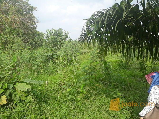 Tanah ukuran 200m2 tanah dijual 12629943