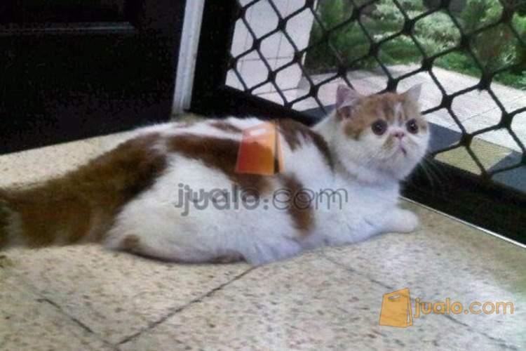 Download 96+  Gambar Kucing Exo Paling Bagus HD
