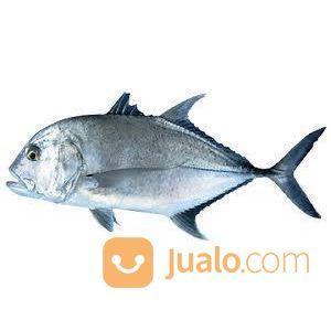 Foss seafood ikan kuw kebutuhan rumah tangga makanan 14643529