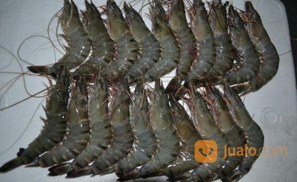 Foss seafood udang ti kebutuhan rumah tangga makanan 14643943