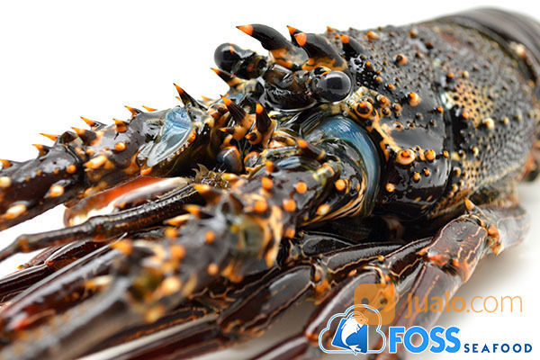 Foss seafood lobster kebutuhan rumah tangga makanan 14644377