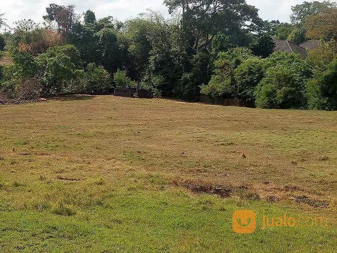 Tanah kosong di subak tanah dijual 15975297