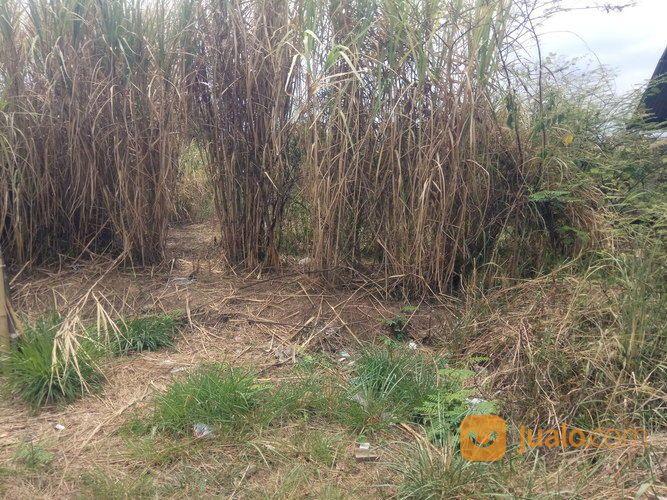 Lahan tanah matang si tanah dijual 17242543