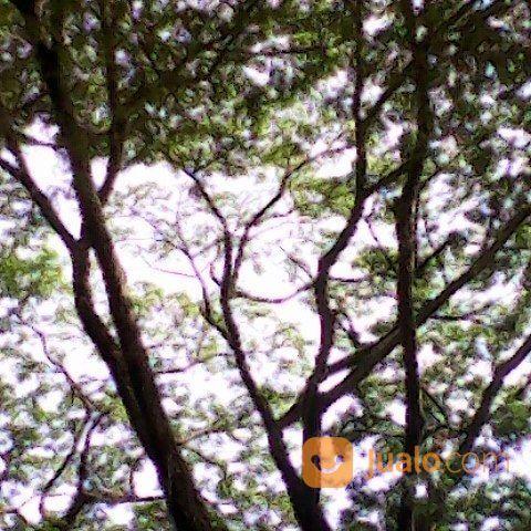 Jasa tebang pohon jak jasa dan pekerjaan lainnya 17760575