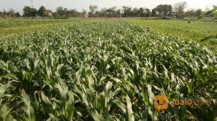 Tanah lt4000m2 siap b tanah dijual 18463839