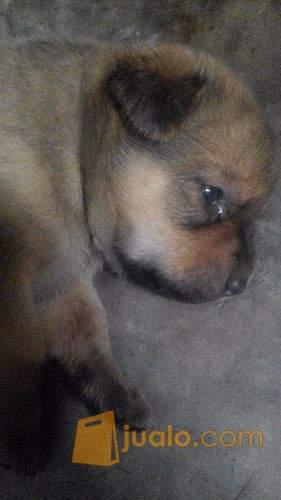 Unduh 66 Koleksi Gambar Anak Anjing Lucu Imut Terbaru