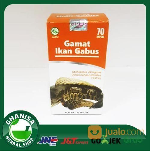 Kapsul gamat ikan gab nutrisi dan suplemen 18937663