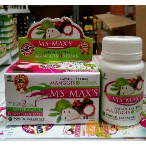 Kapsul ms max s ekst terapi dan pengobatan 19884543
