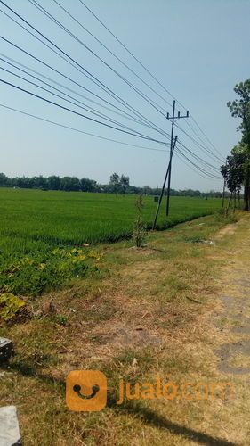 Sawah produktif pingg tanah dijual 21837099