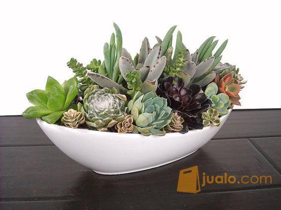 Pot tanaman succulent kebutuhan rumah tangga konstruksi dan taman 6570279